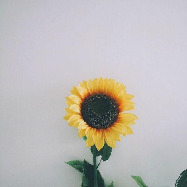 溫暖又帶著淡淡傷感的句子 人生生活和愛情說說