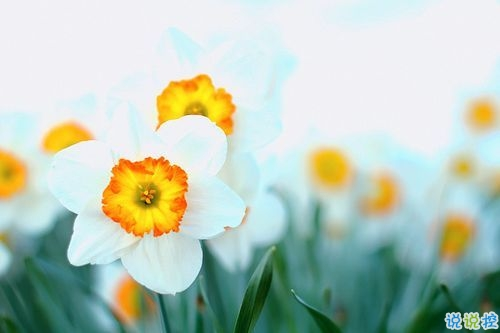 2019告别二月迎接三月励志说说配图 三月你好朋友圈早安心语2