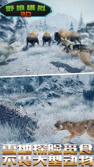 野狼生存模拟截图4