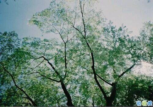 2019植樹節朋友圈心情說說 312植樹節說說簡短好聽的