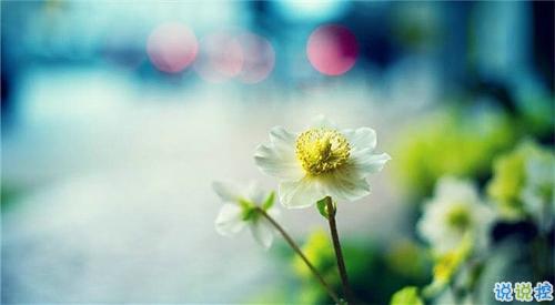 qq說說春天唯美小清新 春天的唯美短句子說說