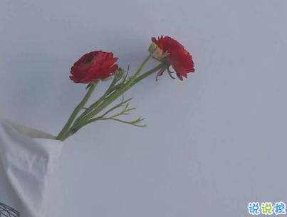 2019最热门的撩人情话带图片 最甜最暖心的情话合集3