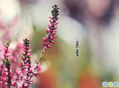 2019夏至早安心语说说大全 夏至快乐祝福语说说