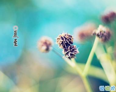 2019夏至说说发朋友圈 最新夏至说说精选