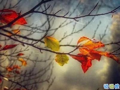 描写秋天的句子优美带图片 秋天到了微信心情说说11