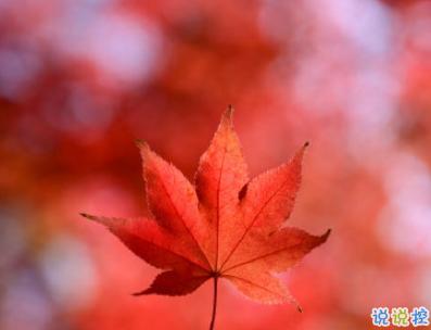 描写秋天的句子优美带图片 秋天到了微信心情说说1