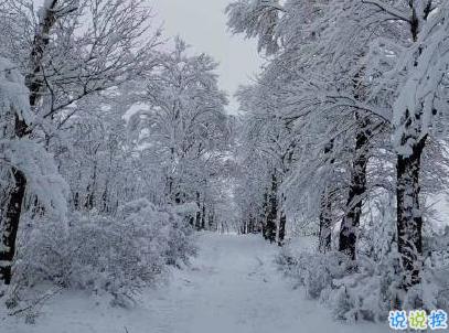 下雪天朋友圈唯美说说配图 下雪了说说简短一句话