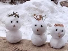 冬天下雪朋友圈说说搞笑大全 下雪天搞笑句子吸引人