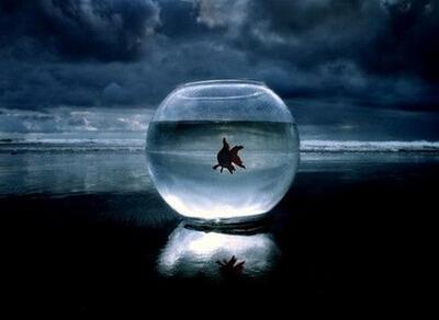 网络伤感说说:别说鱼没有眼泪,就算流成整个大海你也毫不知情